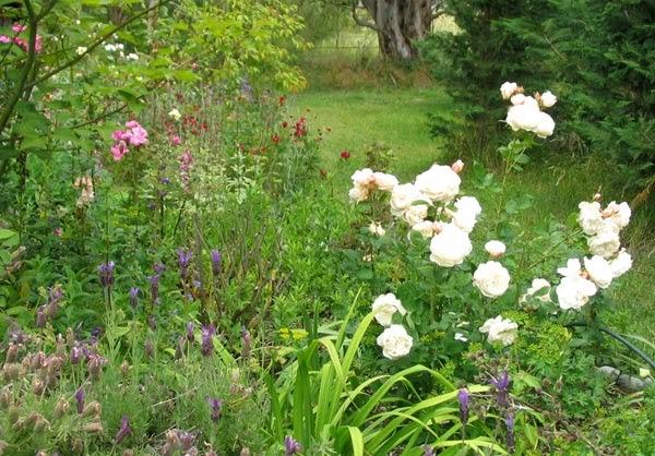 El cuidado de las plantas y el jardin - Cuidado de jardines ...