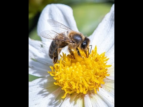 POWER OF BEE'S HONEY FOR SPORTS