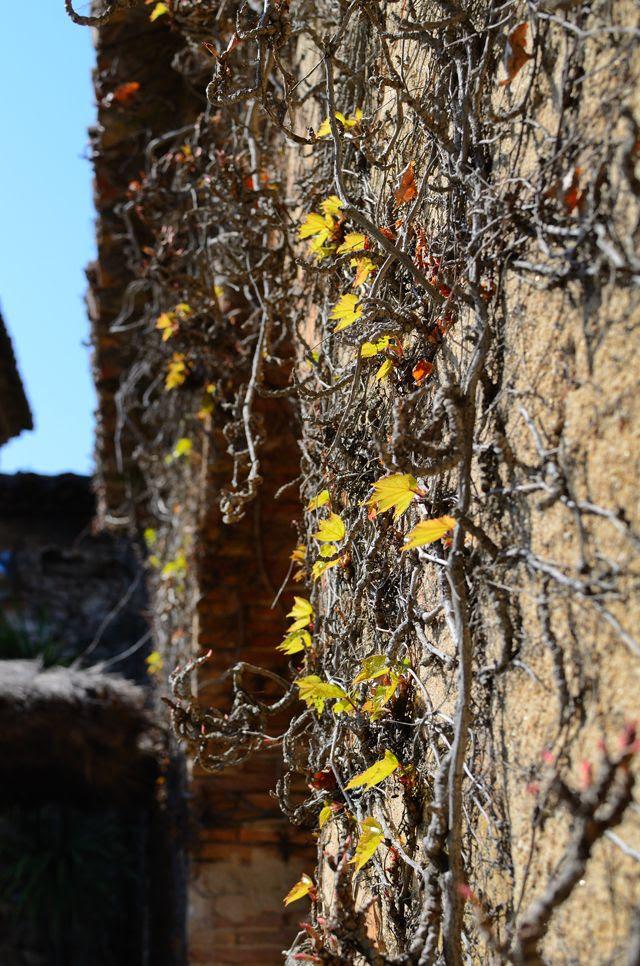 Climbing plant wall [enlarge]
