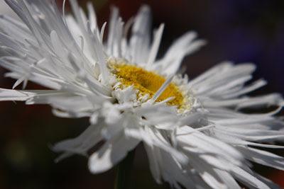 White Flower @ Hampton Court Flower Show