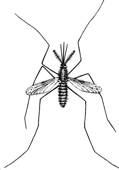 Mosquito clip art Free vector in Open office drawing svg