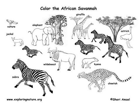 savanna african animals coloring page exploring nature