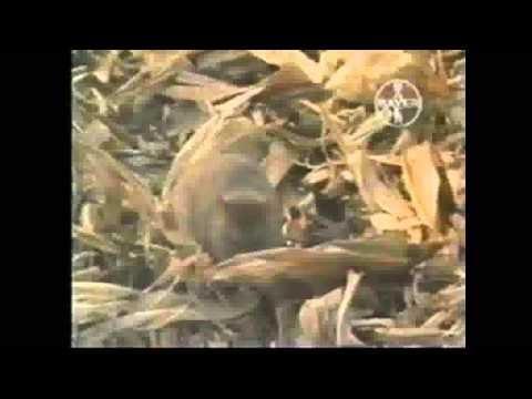 Fumigaciones bayer el fumigador como matar ratas el - Como alejar las ratas de la casa ...