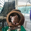 Rattie Ratz: The Trouble with Saying Goodbye | Kings River Life Magazine