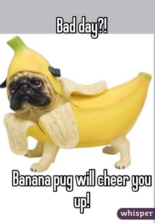 Bad Day Banana Pug Will Cheer You Up