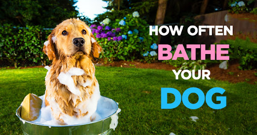 How Often Should I Bathe My Dog? A Guide to Wash Your Dog
