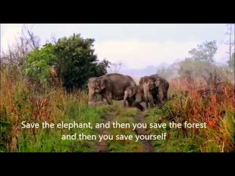 The  Elephant::Concern on Conservation