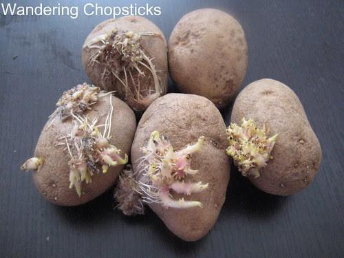Homegrown Fingerling Potatoes 2