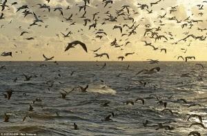 580+ Gambar Hewan Darat Laut Dan Udara Terbaru