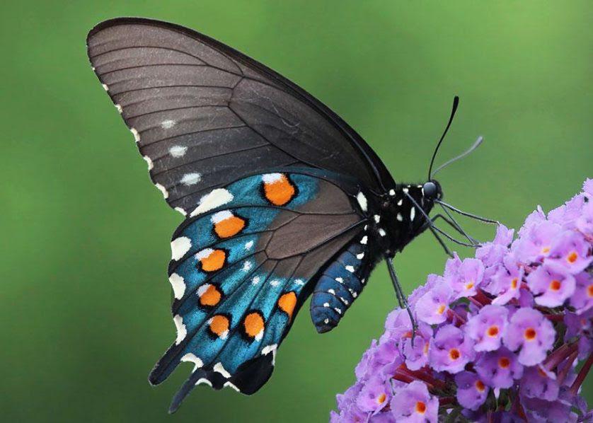 transformacao borboletas 16-