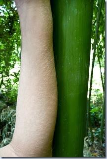 57 bambus in roka