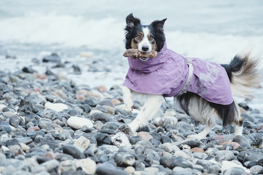 ¡Chubasquero Drizzle Coat y Abrigo Summit Parka de HURTTA! - Family DOG