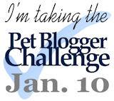 Pet Blogger Challenge Jan. 10