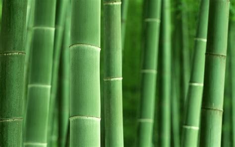 Bamboo Skincare   Not Just Panda Food   Skin Care Tips