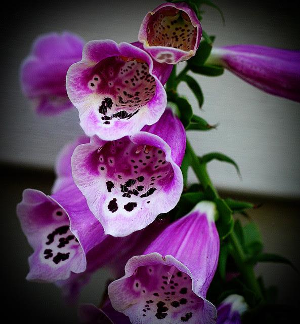 fleurs_1 copy