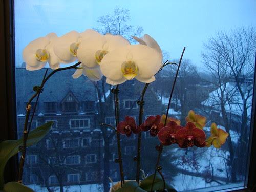 1/18/11 orchids