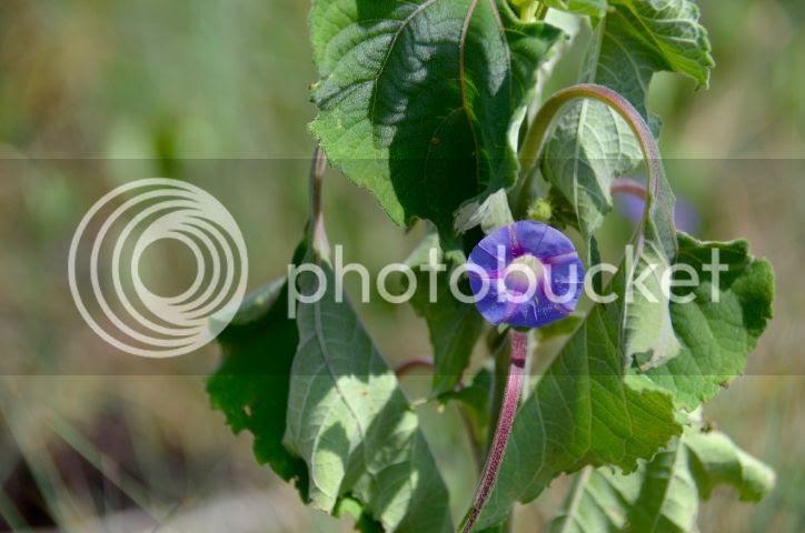 photo DSC_0226_zps7yjivl2h.jpg