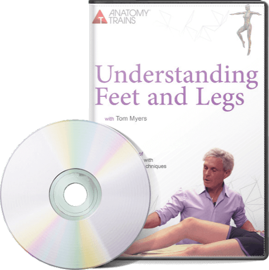 New From Tom Myers And Anatomy Trains Comes Understanding Feet And