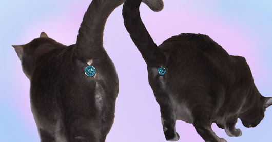 This accessory turns your cat's butt into a beautiful jewel