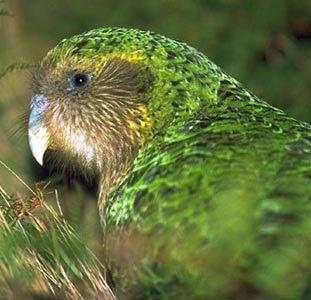 http://monado.files.wordpress.com/2009/04/kakapo.jpg?w=600