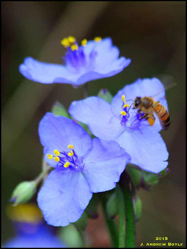Honey Be