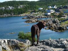 Tate in Newfoundland