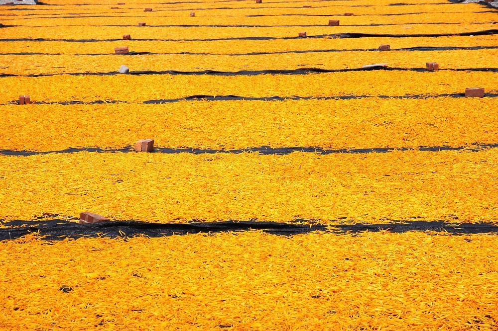 黃色的花海