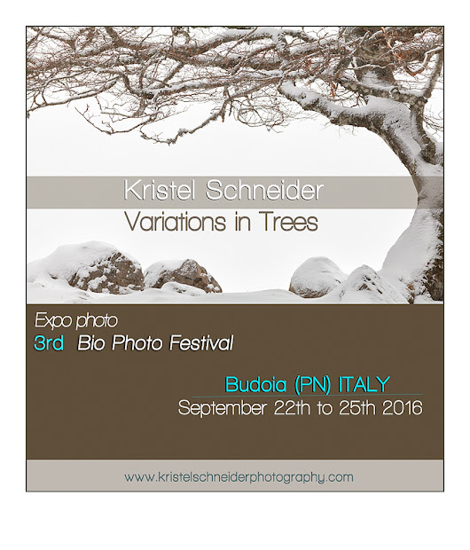 Expo photo Variations in Trees – in Italy