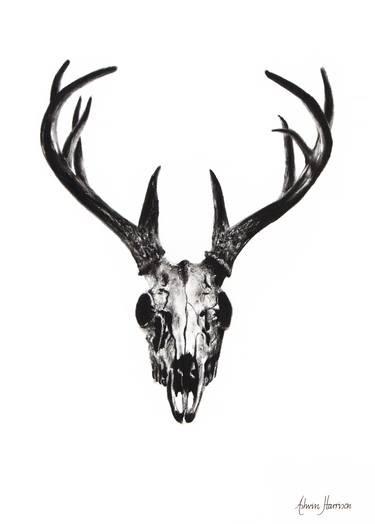 Deer Head How To Draw A Deer : Realistic, Drawing, Tutorial