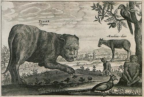 Tiger etc