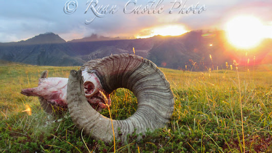 Chugach State Park Sheep Hunt - Vast Alaska