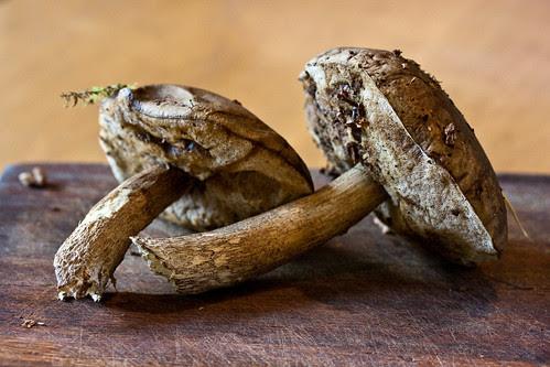 Mushrooms with watercress-4