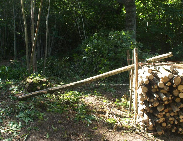 DSC_7078 logs in the woods
