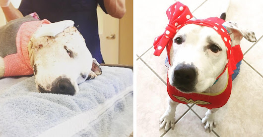 Recovering Rescue Dog Keeps Receiving Hats From People Around the World