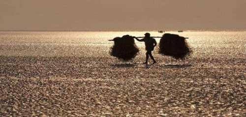 chandipur-η-ασυνήθιστη-παραλία-όπου-η-θάλασσα-εξαφανίζεται