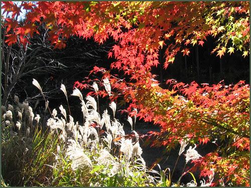27 shining autumn OK