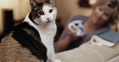 Kidney Disease in Cats: What Cat Owners Should Know