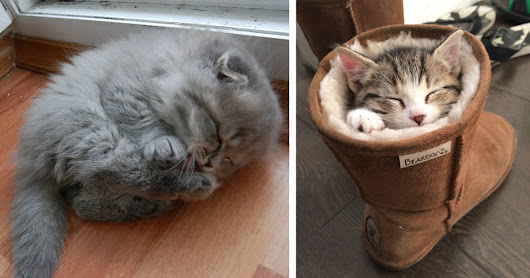 22+ Sleepy Kittens Doing What They Do Best – Sleep