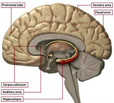 http://www.shockmd.com/wp-content/berger_embed_brain.jpg