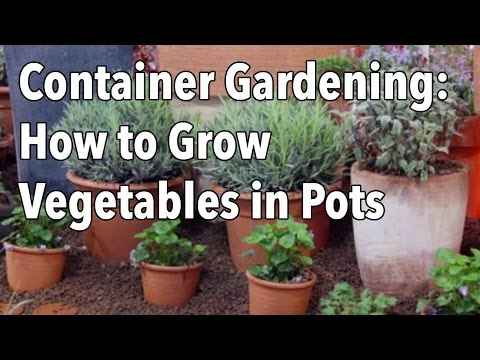 Containerized Gardens: Vital Tips When Starting Your Home Organic Vegetable Garden