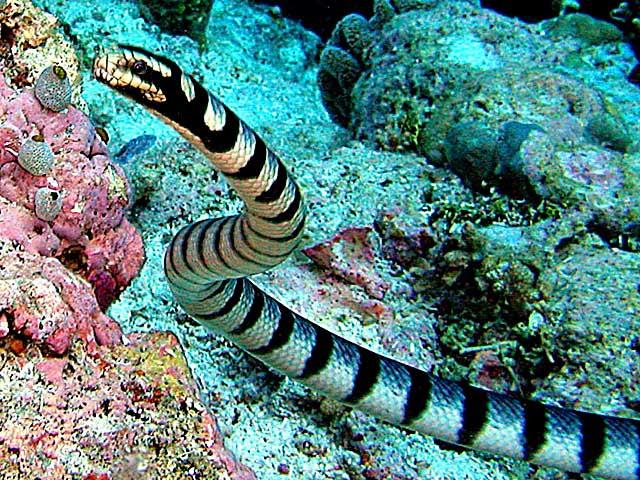 66+ Gambar Binatang Ular Laut Gratis Terbaru