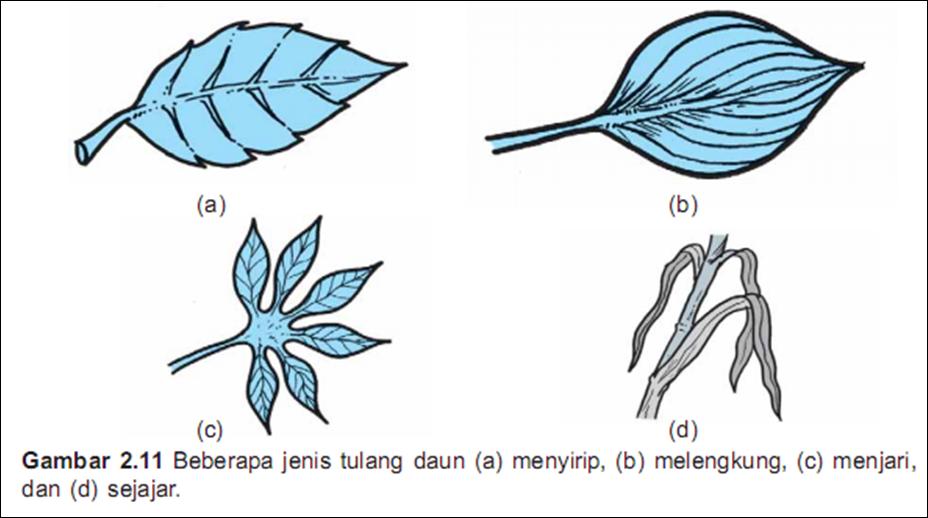 tulang daun