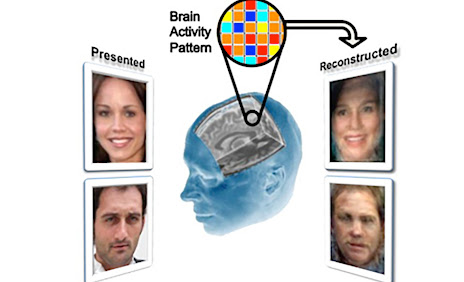 Yale researchers reconstruct facial images locked in a viewer's mind