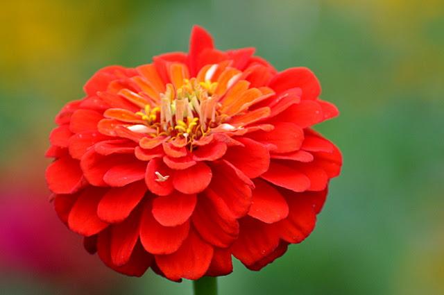 Blumen auf der Freundschaftsinsel