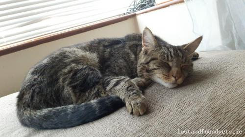 Cat Lost / Missing (Male, Tabby), Carabullawn, Limerick City Fri, Aug 18th, 2017
