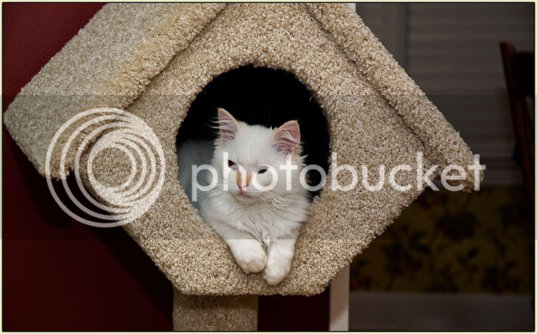 Birdhouse Levon Too