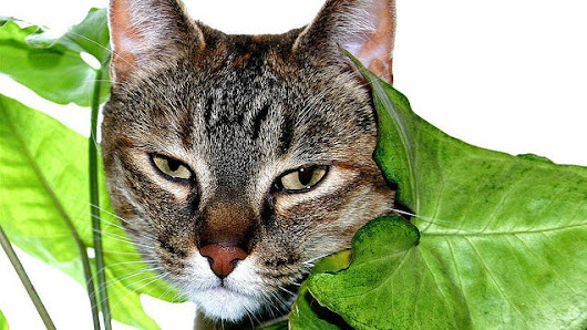 Protect Your House Plants from Your Cats with Citrus Peels