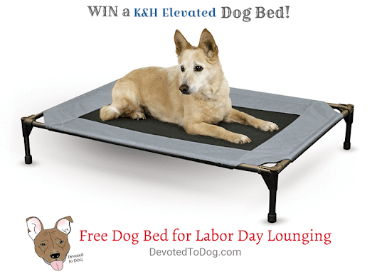 First Giveaway: Free Dog Bed for Labor Day Lounging
