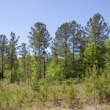 154 Acres on South River Road near Lillington in Harnett County NC for sale