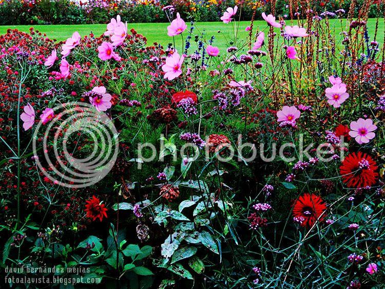 Fotografía de un macizo de flores en un parque de París, Francia, con pequeñas flores rosas por la parte superior que se me antojan como mariposas revoloteando